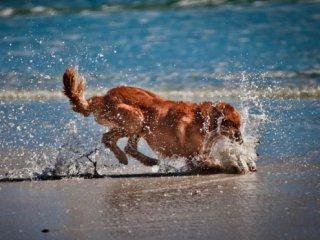 На протяжении двух лет француз судится за право своей собаки купаться в море