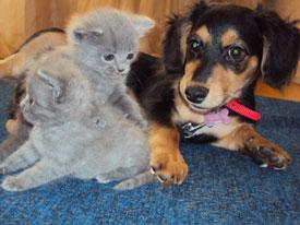 В Уфе такса усыновила котят