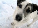 Собачья преданность вновь поразила тольяттинцев