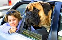 Поехать в Европу с собакой или кошкой станет проще