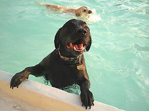 В Хельсинки собаки теперь могут посещать собственный бассейн