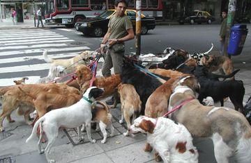 Как петербургских собачников ловят на штрафы