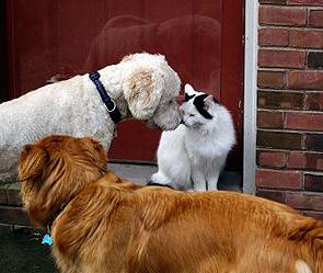 В Москве вводится обязательная регистрация собак и кошек
