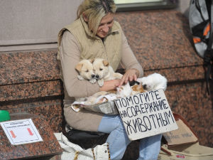 Жителя Новокуйбышевска осудили за то, что убил щенка (Самарская область)