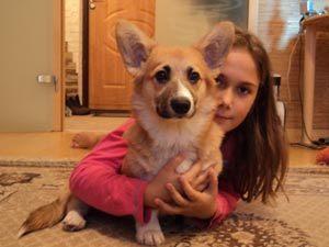 Девочка из Москвы попросила у королевы Великобритании собаку породы вельш-корги-пемброк