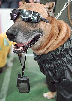 Как появились очки для собак