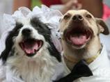 В Нью-Йорке состоялась свадьба двух собак