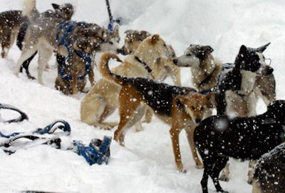В Канаде расследуют массовое убийство собак