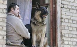 Собаки и их хозяева: неизвестное об известном