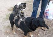 Собака, кошка и крыса стали лучшими друзьями
