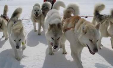 Священники проедутся на собаках (Камчатка)