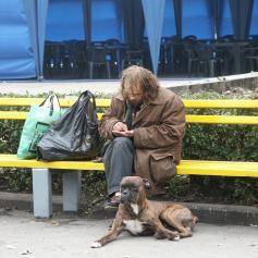 В Украине появятся мобильные клиники для собак