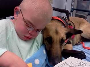 Собака из приюта поддерживает жизнь умирающего мальчика