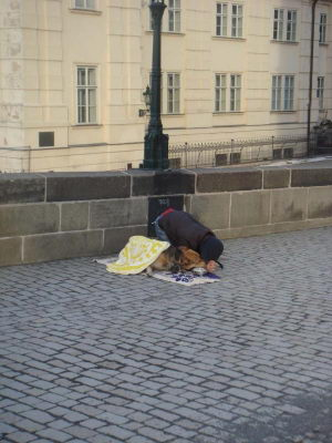 Почему в Чехии нет бездомных собак?