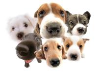 В Санкт-Петербурге создадут партию любителей собак