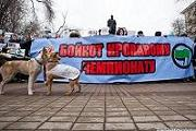 Зоозащитники призвали к бойкоту «Евро-2012» из-за жестокости к бездомным животным