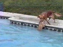 Собака спасает своего щенка