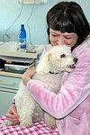 Собакам разрешили посещать хозяев в больнице (Италия)