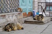 В Баку создают полигон для бездомных собак