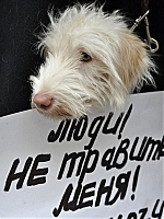 Собачники Владивостока выйдут на пикет
