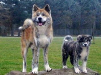 Исследование: собаки совсем не те, как прежде (США)