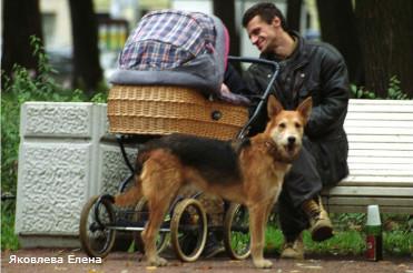 Парки для собак шаговой доступности (Финляндия)