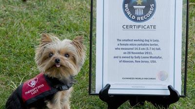 Йоркширский терьер стал самым маленьким рабочим псом (США)