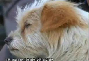Невероятная настойчивость бездомной собаки (Китай)