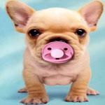 Новая версия учёных: своему облику мы обязаны собакам