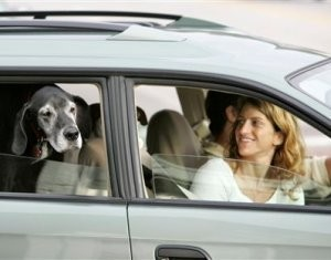 За непристёганную собаку - штраф (США)