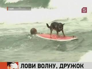 В США состоялось соревнование среди собак по сёрфингу