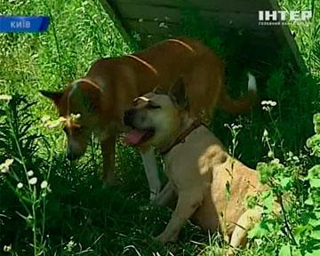 В день поцелуев: о бездомных и влюбленных собаках (Украина)