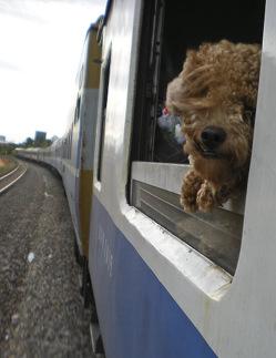 Собакам разрешили путешествовать в поездах в Италии