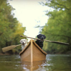 Как научить собаку плавать?