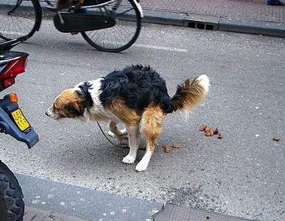 Прага воюет с собачьими экскрементами