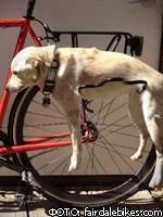 Велосипедный багажник для самых ленивых собак