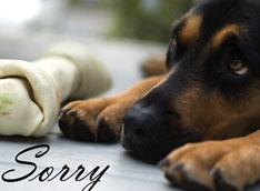 Собака загрязняет экологию сильнее, чем внедорожник