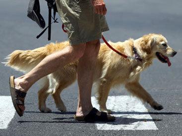 В Италии награждены собаки, спасшие жизнь своим хозяевам