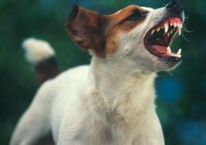 Суд постановил - собакам лаять не больше 4 минут (Израиль)