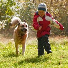В Петербурге запретят детям выгуливать собак