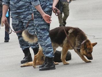 Собака в отставке вернулась на службу в метро (Москва)