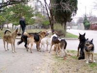 Еда помогает собакам искать цель
