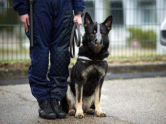Бразильская мафия объявила полицейскому псу вендетту