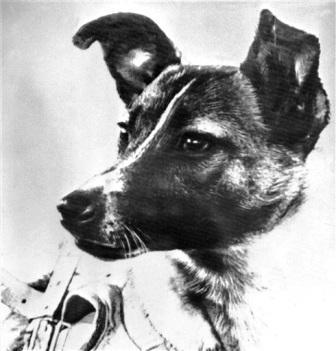Исполнилось 55 лет со дня полёта первой собаки в космос