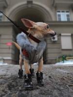 Депутаты Государственной Думы возьмутся за домашних животных