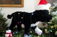 Любимая собака президента США стала символом Рождества