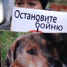 На защиту собак просят бросить спецназ