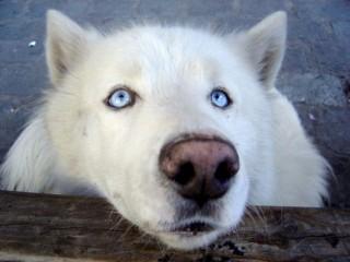 Ученые выяснили, что собаки читают по глазам, как дети