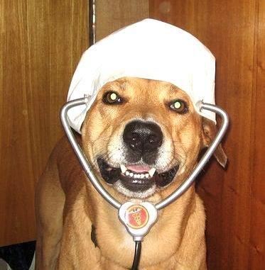 Пёс из США помогает стоматологу