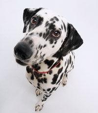 Потерявшаяся собака доехала на автобусе до собачьего приюта (Великобритания)